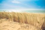 beach dune holiday 9537 scaled